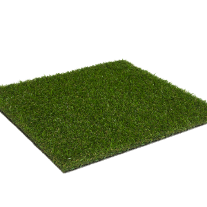 _Magnolia_Summerset_sttswings_Ireland_Carlow_synthetic_grass